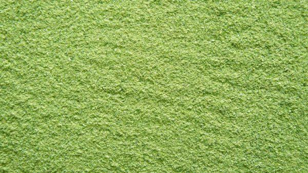 Zielona fasolka - Puder